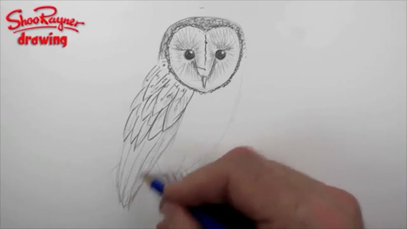 Still image from: How to Draw a Barn Owl