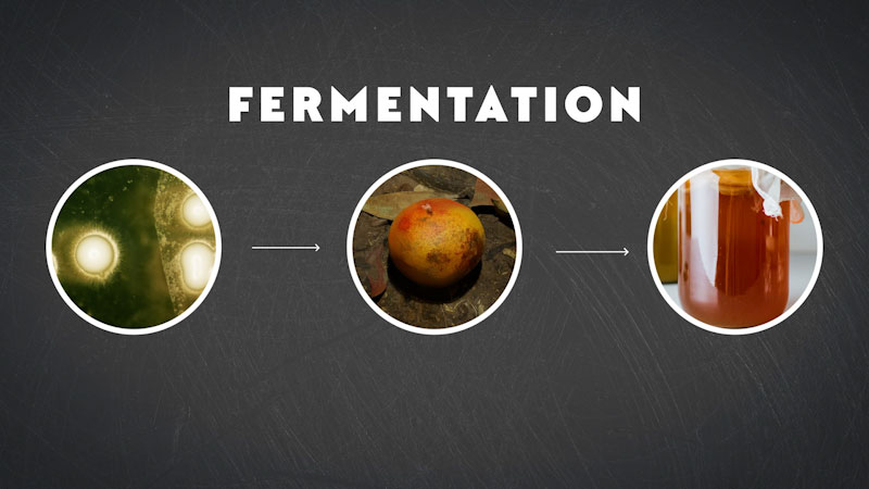 Still image from: Eons: How We Figured Out Fermentation