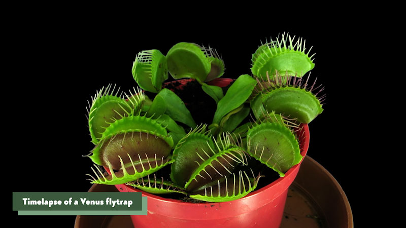 Still image from: Eons: How Plants Became Carnivores