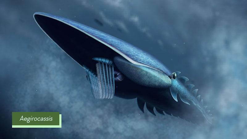 Still image from: Eons: How Plankton Created a Bizarre Giant of the Seas