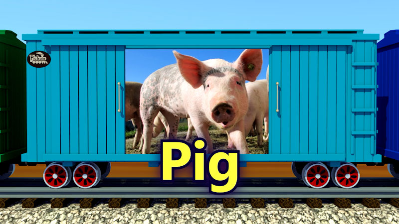Still image from: PicTrain: Real Farm Animals