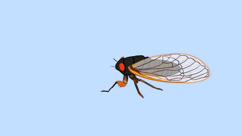 Still image from: Emily Graslie's Art Lab: Cicada Mania