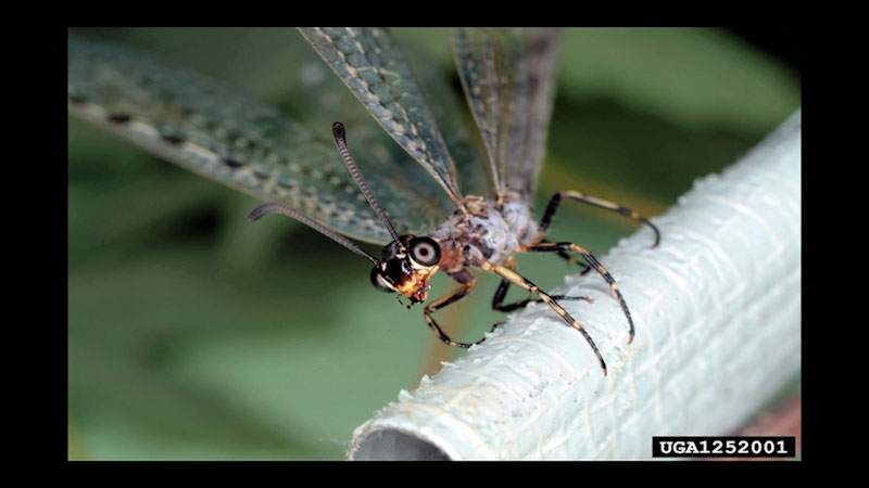 Still image from: All About Insects