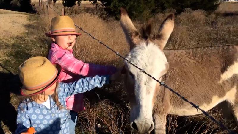 Still image from: Adorable Baby Donkey: Cute Donkey Family