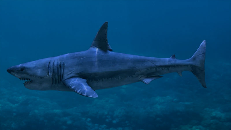 Still image from: All About Sharks for Kids: The Great White Shark