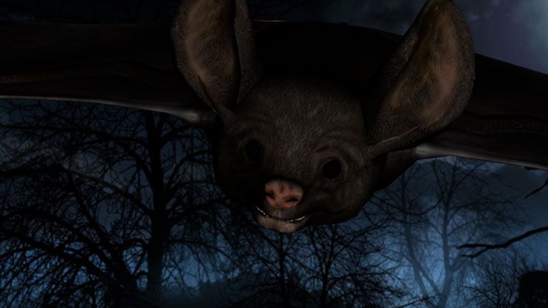 Still image from: Bats for Kids: All About Bats