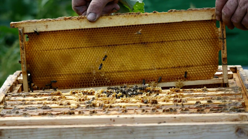 Still image from: Busy Bees! Learn About Bees