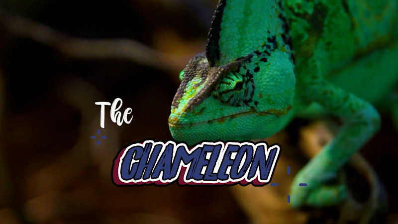 Still image from: Fun Animal Adventure: All About Chameleons