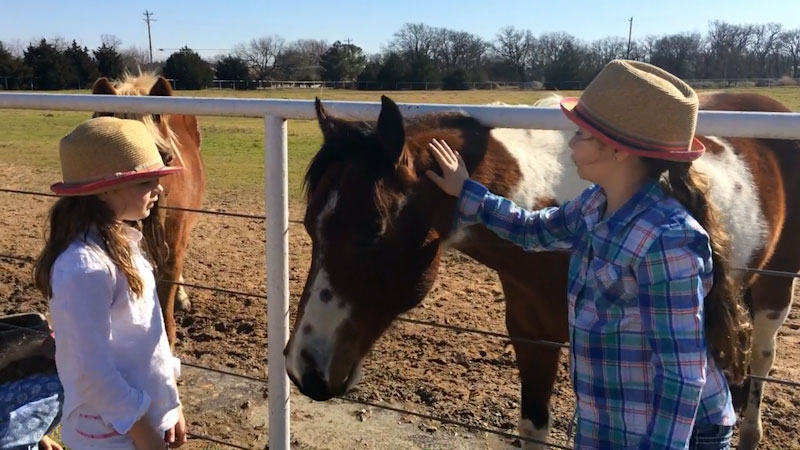 Still image from: Horses for Kids: All About Horses