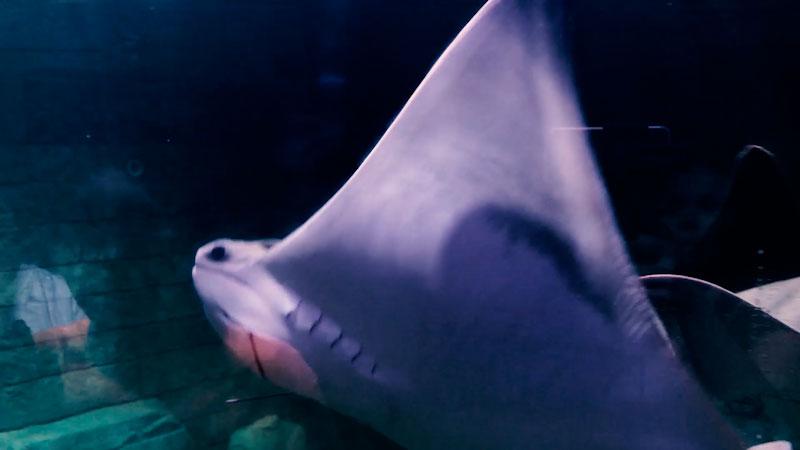 Still image from: Kids Animal Adventure: Behind the Scenes at the Sea Life Aquarium!