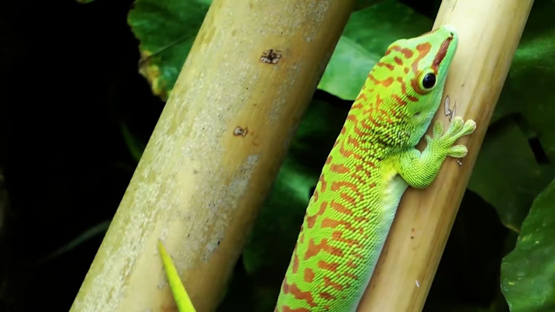 Still image from: Reptiles for Kids: All About Reptiles