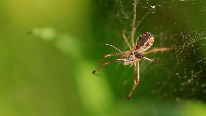 Still image from: Spiders: Facts About Spiders