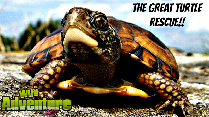 Still image from: Turtle Rescue: Turtle Rescued From the Highway of Doom!