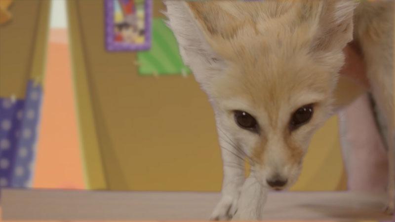Still image from: Wild Explorers: Meet a Fennec Fox!
