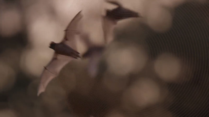 Still image from: Wild Explorers: All About Bats