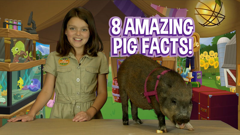 Still image from: Wild Explorers: 8 Amazing Pig Facts!