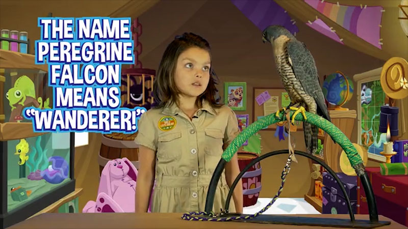 Still image from: Wild Explorers: Meet a Falcon!