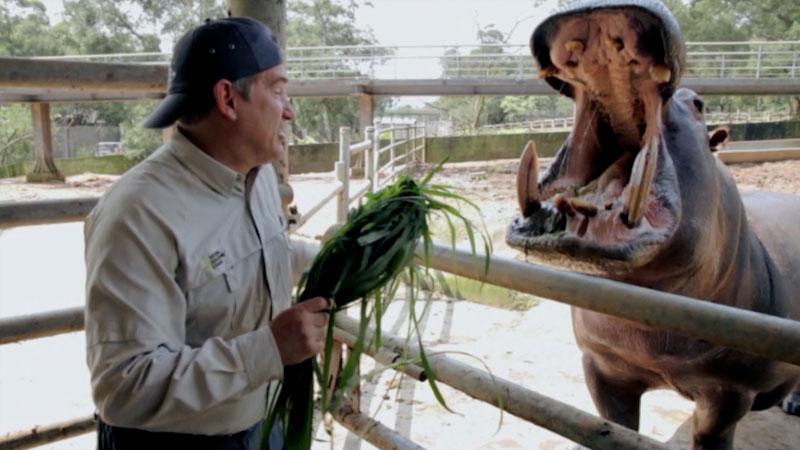 Still image from: Animal Jam: Dr. Brady Barr Feeds a Hippo