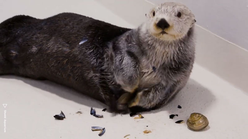Still image from: Animal IQ: Otters--Cute, Playful, Geniuses?