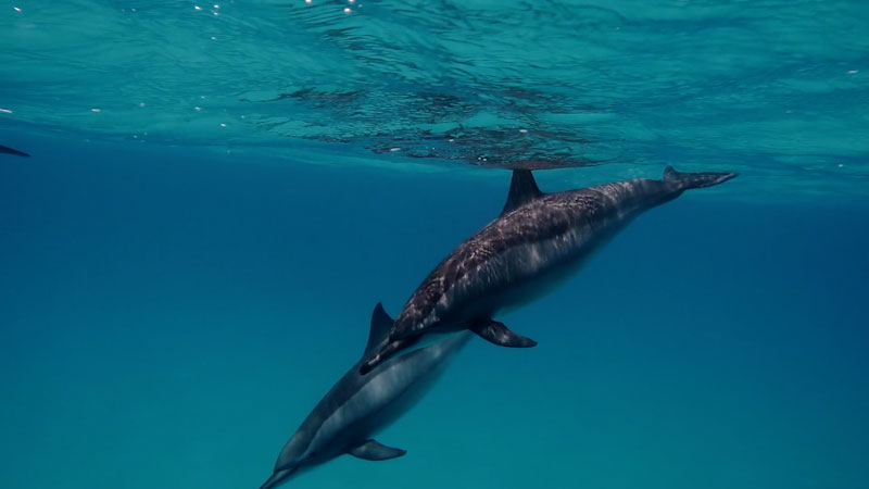 Still image from: Animal IQ: Can Dolphins Do Just About Anything?