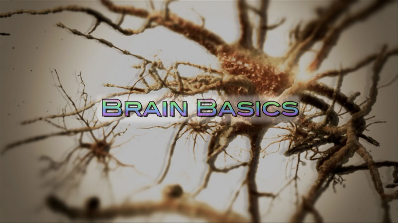 Still image from: Neuroscience: Understanding the Brain--Brain Basics