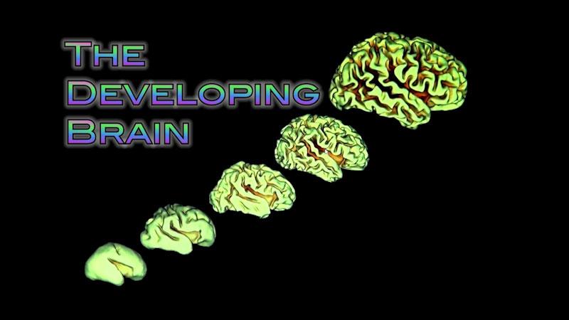 Still image from: Neuroscience: Understanding the Brain--The Developing Brain