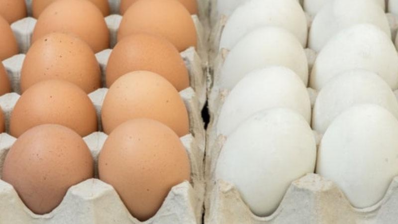 Still image from: Eggs