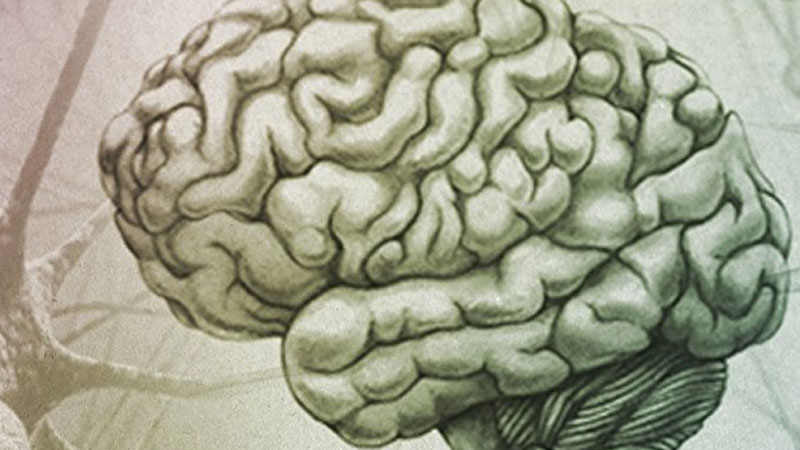 Still image from: The Evolution of the Brain