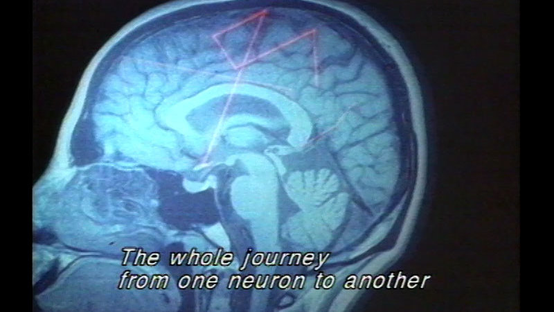 Computer image displaying a cross section of the human head with a path through the brain highlighted in red. Caption: The whole journey from one neuron to another