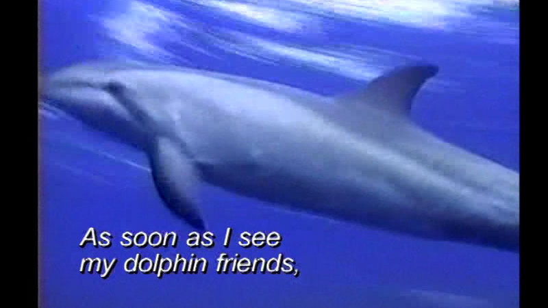 Still image from Brazil: Breno and His Dolphin
