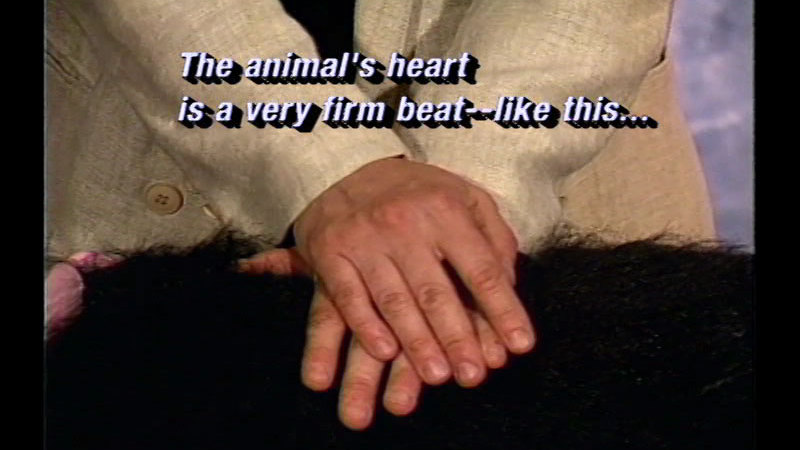 Still image from Canine CPR