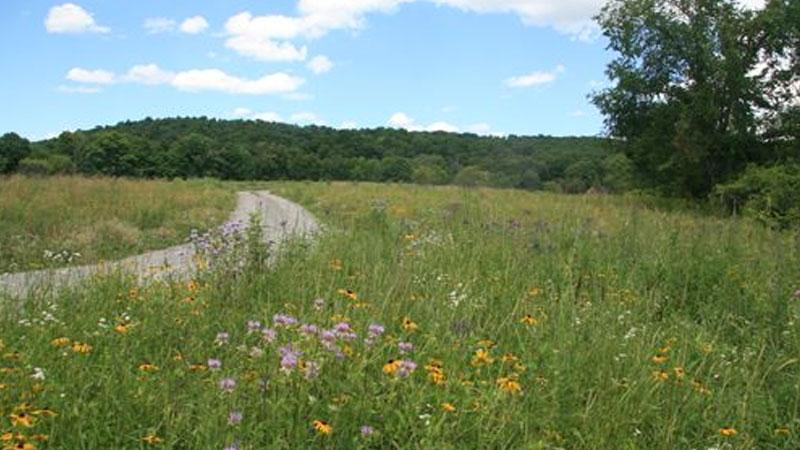 Still image from Grasslands