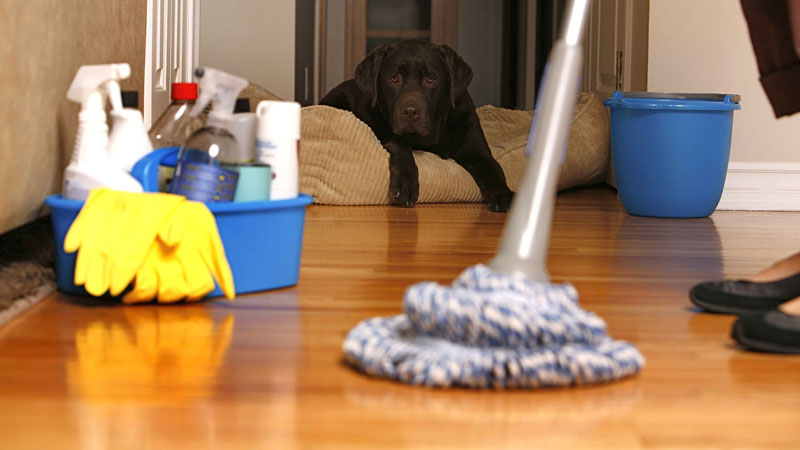 Still image from: How to Clean a House