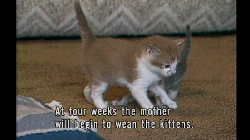 Still image from Kittens to Cats