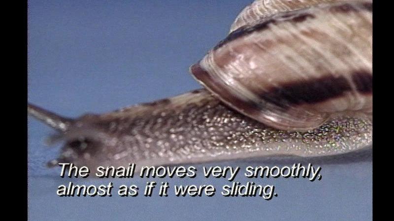 Still image from Mollusks