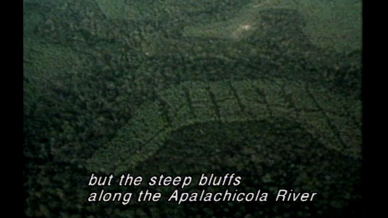 Indistinct light and dark green pattern. Caption: but the steep bluffs along the Apalachicola River