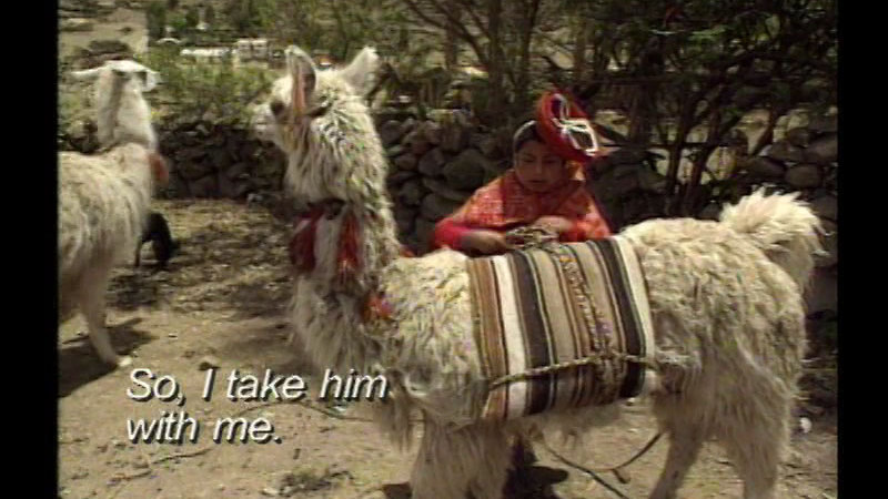 Still image from Peru: Justina and Her Llama