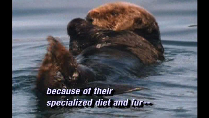 Still image from Sea Otters