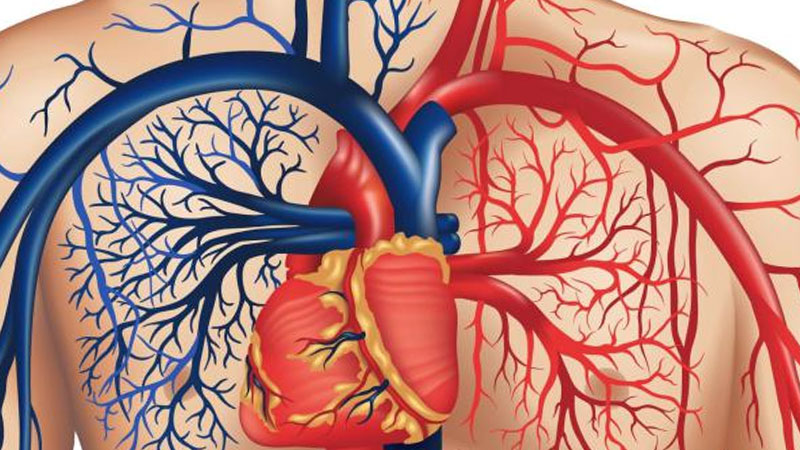 Still image from: What's Inside Your Body? Heart & Blood/Digestion & Respiration