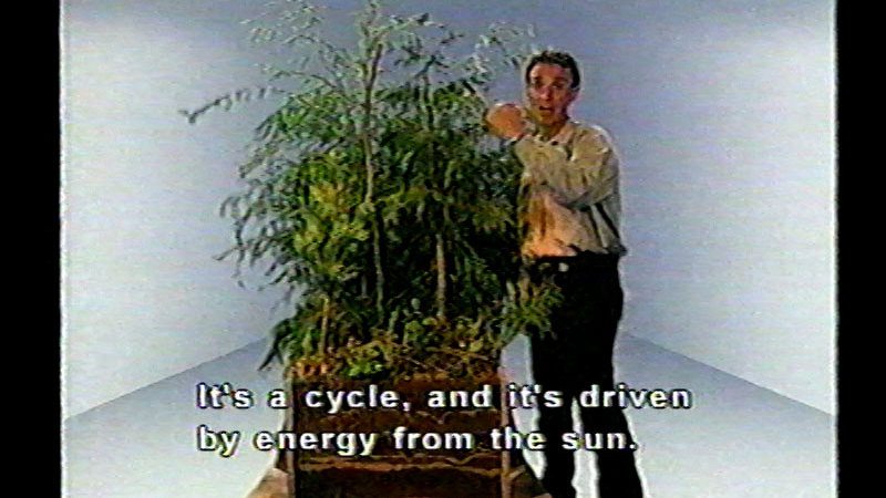 Still image from Bill Nye The Science Guy: Forests