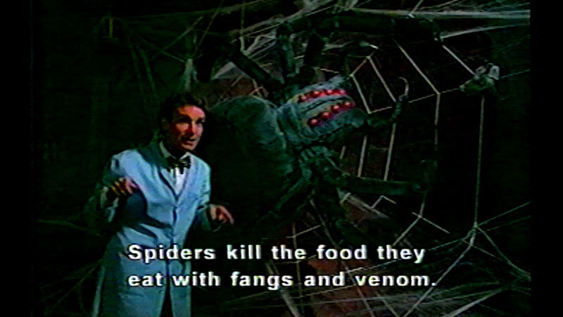 Still image from Bill Nye the Science Guy: Spiders