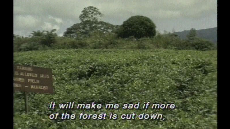 Still image from: Cameroon: Africa's Child: My Rainforest