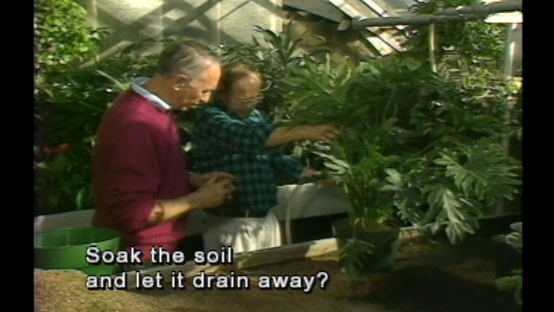 Two people talking while standing in a greenhouse surrounded by potted and planted plants. Caption: Soak the soil and let it drain away?