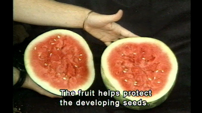 Still image from Plant Reproduction