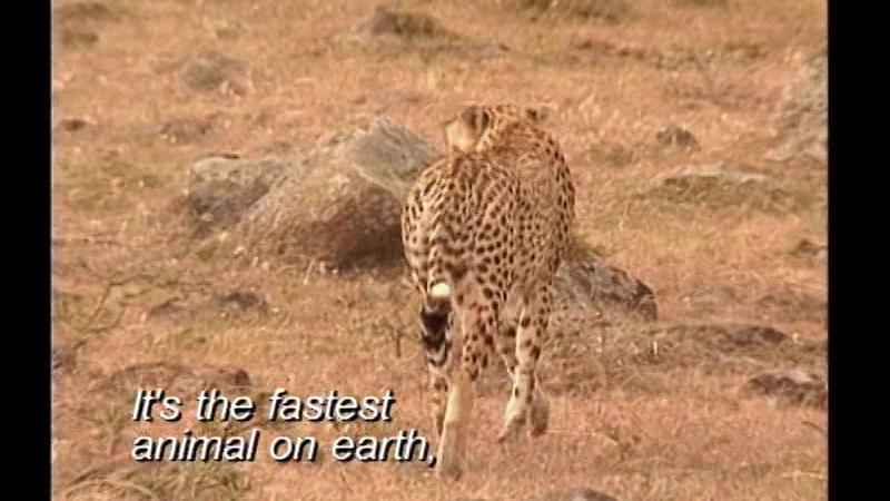 Still image from Saving Earth's Animals