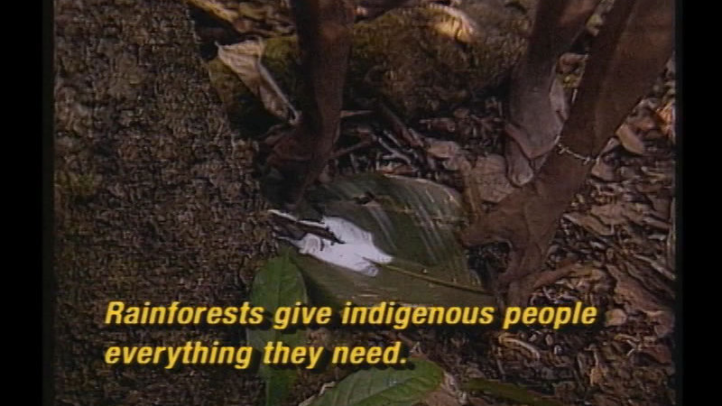 Hands reaching down to pick up a board leaf from the ground. Caption: Rainforests give indigenous people everything they need.