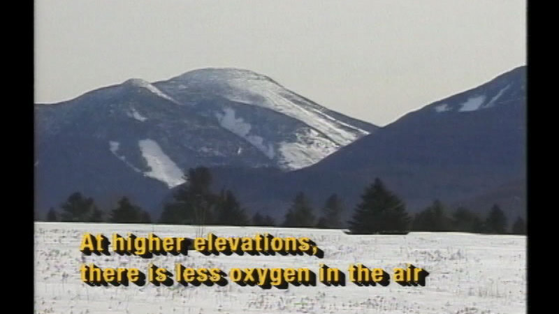 Snow covered plain with occasional evergreen trees and a mountain rising up in the background. Caption: At higher elevations, there is less oxygen in the air