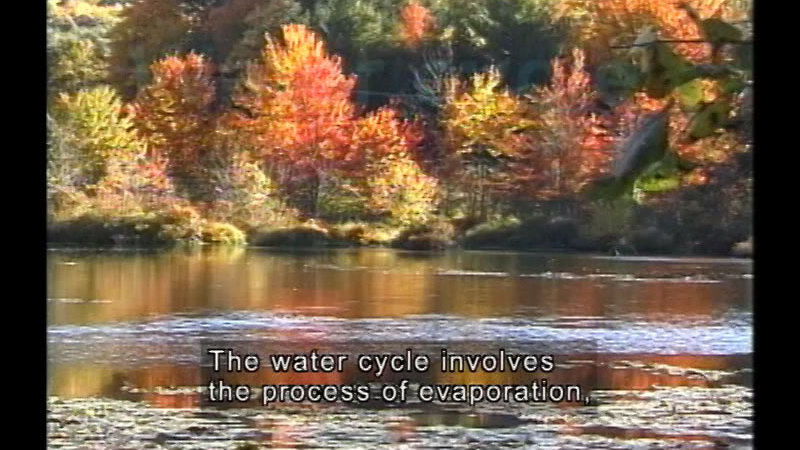 Trees and brush on the shoreline of a calm body of water. Caption: The water cycle involves the process of evaporation,