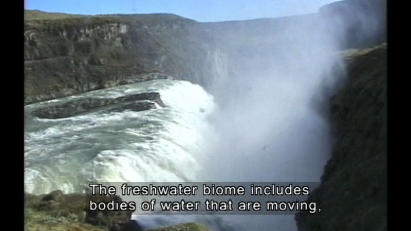Waterfall. Caption: The freshwater biome includes bodies of water that are moving,