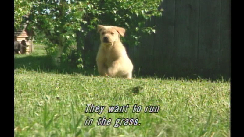 A puppy running across a lawn. Caption: They want to run in the grass.